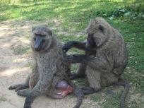 - gibbons flohsuche