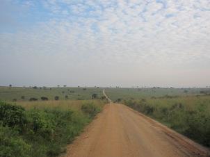 - safari road