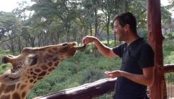 wolfgang giraffe 3