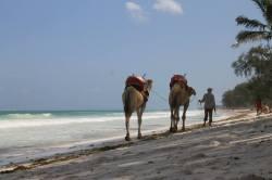 kamel kenia not diani