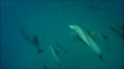zansibar delfine gut -